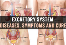 excretory system diseases symptoms and cure